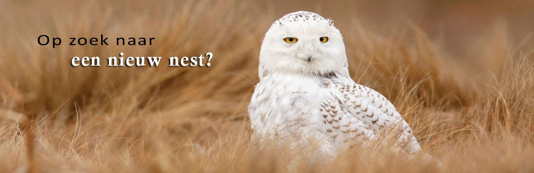 Op zoek naar een nieuw nest?